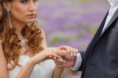 Wedding lavender field. Stock Photo