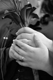 Wedding Lily black and white Stock Photo