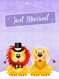 Wedding of lions Royalty Free Stock Images