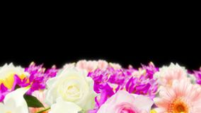 Many colorful flowers loop animation. Rainbow color flowers. Garden filled with multicolored flowers. Wedding loop animation. Many flower scene of rainbow color stock footage