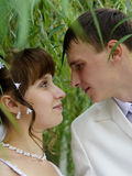 Wedding, los recienes casados Fotografía de archivo libre de regalías