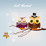 Wedding owls Stock Images