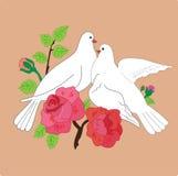 Wedding dove Stock Photo