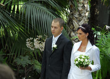 Wedding in park Stock Images
