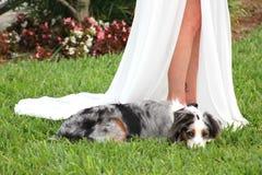 Wedding Partner Stock Image