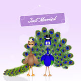 Wedding of peacocks. Illustration of Wedding of peacocks Stock Photo