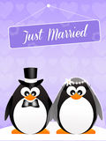 Wedding of penguins Stock Photography