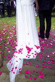 Wedding petals Royalty Free Stock Image