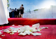 Wedding petals of roses on red carpet Royalty Free Stock Photos