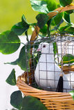 Wedding pigeon in  cage Royalty Free Stock Photos