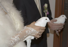 Wedding pigeons. White pigeons in hands of a just married couple Royalty Free Stock Images