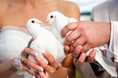 Wedding pigeons Royalty Free Stock Photos
