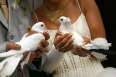 Wedding pigeons Stock Images