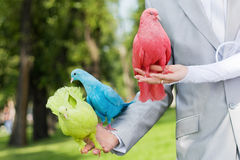 Wedding pigeons in the hands Royalty Free Stock Images