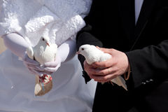 Wedding pigeons in hands of the groom and the brid Royalty Free Stock Images