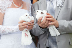 Wedding pigeons in hands  the groom and the bride Royalty Free Stock Images