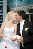 Wedding pigeons in hands of the groom Stock Image