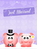 Wedding of pigs Royalty Free Stock Photography