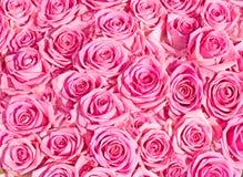 Wedding pink bridal roses Royalty Free Stock Photo