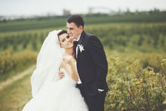 Wedding portrait of a young couple Royalty Free Stock Images