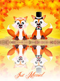 Wedding of red foxes Stock Photo