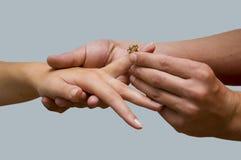 Wedding ring. Putting on the wedding ring Stock Image