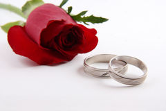 Wedding ring. White gold wedding rings and a red rose on white background, this composition is used for invitation cards Stock Photos