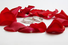 Wedding ring. White gold wedding rings on white background surrounded with rose petals, this composition is used for invitation cards Royalty Free Stock Photography