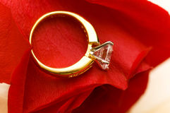 Wedding ring. On the petal of red rose Royalty Free Stock Images