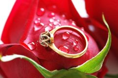 Wedding ring with brilliant on. Wedding ring with brilliant  on the red rose Stock Photo