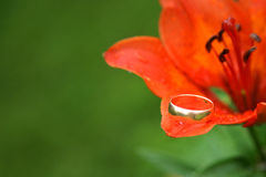Wedding ring on flower Royalty Free Stock Image