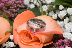 Wedding Ring on Flowers 2. Wedding Rings (engagement ring, Bride's Ring and Grooms Band) sitting atop a peach colored rose.  Narrow depth of field Royalty Free Stock Photography