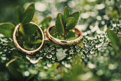 Wedding-ring on green Stock Photos