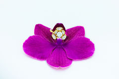 Wedding ring of orchids Stock Photo