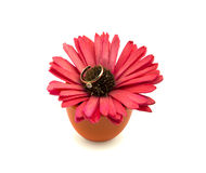 Wedding ring on red gerbera isolated on white background Stock Photography