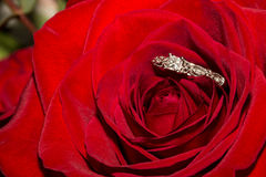 Wedding Ring and Red Roses Royalty Free Stock Photo