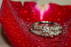 Wedding Ring and Red Roses Royalty Free Stock Image