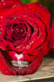 Wedding Ring and Red Roses Stock Photo