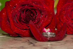 Wedding Ring and Red Roses Royalty Free Stock Photography