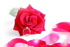 Wedding Ring in Rose stock photo