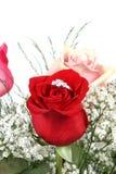 Wedding ring in rose royalty free stock photos