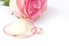 Wedding ring with rose. Gold wedding ring with rose Royalty Free Stock Photography