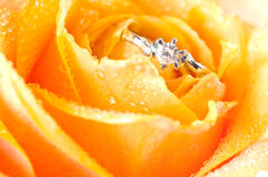 Wedding ring and rose Royalty Free Stock Image