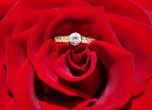 Wedding ring and rose Stock Photography