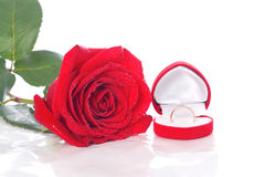 Wedding Ring and Rose, Will you marry me? Stock Images