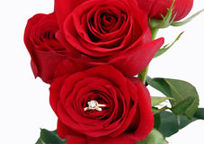 Wedding ring and roses Stock Photo