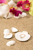 Wedding ring in a shell Royalty Free Stock Photos