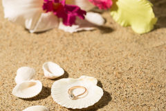 Wedding ring in a shell Stock Photos