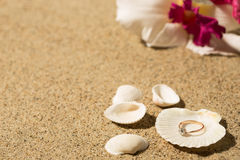 Wedding ring in a shell Royalty Free Stock Images