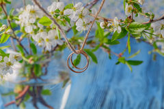 Wedding ring with spring cherry flowers background Royalty Free Stock Photos